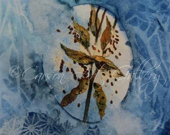 Milkweed: Digital Print by Colleen Carson