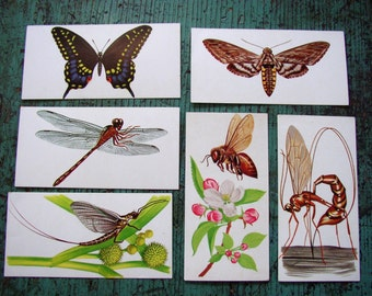 WINGED CRITTERS FLASH CARDS, C.1962. COLOR ILLUS, TEXT, AWESOME