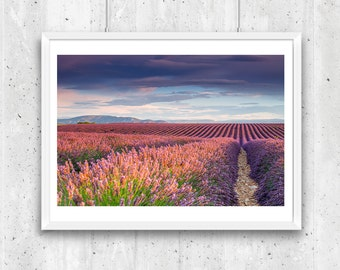 Provence, Lavender Fields in the Early Summer Morning, France – Fine Art Print