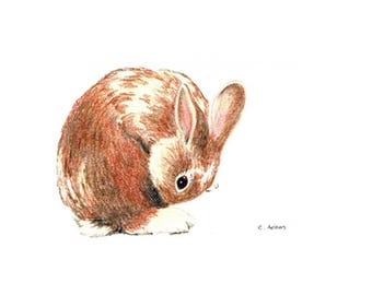 Baby Bunny Original Hand Drawn Colored Pencil Sketch