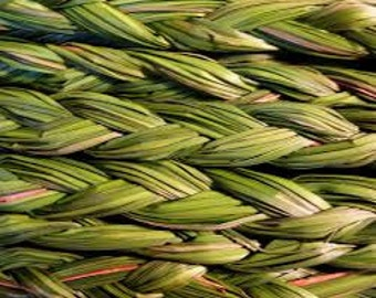 Sweet Grass Seeds, Hierochloe odorata, Sacred Ceremonial Braided Grass, Basket Weaving, Native and Shamanic Plant, Medicinal Herb