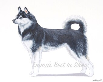 Alaskan Klee Kai Dog - Archival Fine Art Print - UKC - Best in Show - Champion - Breed Standard - United Kennel Club UKC Breed