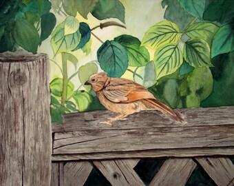 Baby Cardinal- Wall art