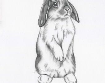 "Rabbit Art, ORIGINAL 11""x14"" Charcoal Lop Eared Bunny Drawing, Bunny Art,  Nursery Art -  Rabbit Drawing, Rabbit Sketch, Bunny Sketch"