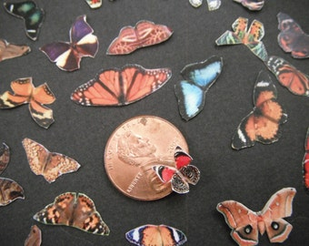 Miniature Butterflies