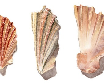 Shell fragments -- LARGER print of original watercolour painting A4 21 x 30 cm