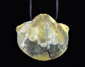 Brachiopod fossil bead, stone bead