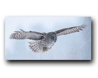 Owl Photo, Owl Print, Snowy Owl, Nature Print, Bird Picture, Bird Photography, The Grey Ghost, Winter Owl, Great Grey Owl, Cold Owl