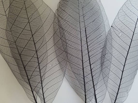 Large Black Dyed Skeleton Leaves Rubber Tree Leaf Skeletons