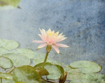 Water lily, Pink Lily Pad, Photo, Fine Art Photography, Flower Photography, water lilies, Photo print, Lily pads, Lilypad photo, Water