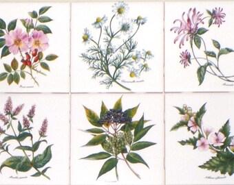 """Tea Herb Botanical Flower Ceramic Tiles set of 6 of 4.25"""" Kiln fired Back Splash"""