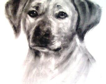 pet portrait, custom pet portrait, dog portrait, pencil pet portrait, hand drawn portrait, pet drawing, dog drawing, pet portrait commission