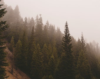 Forest Print, Foggy Trees Fine Art Print, Washington Photography, Forest Decor, Dreamy Scene, Trees Photography, Selkirk Mountains