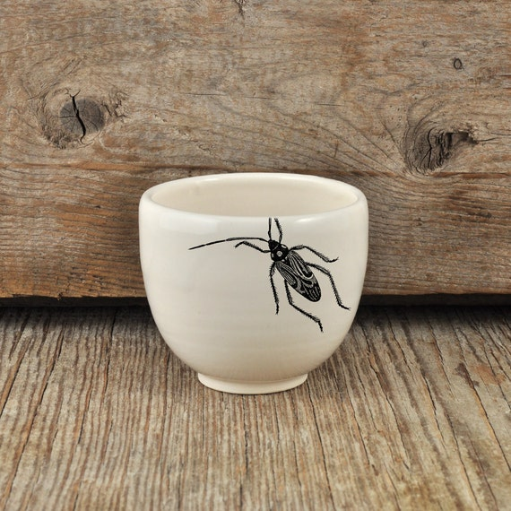 Porcelain espresso / tea cup with vintage INSECT prints