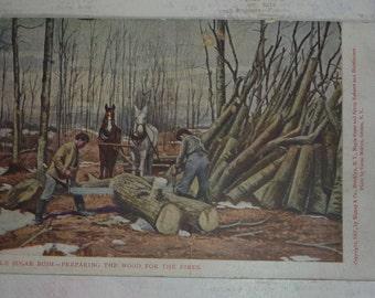 Maple Sugar Bush -Preparing the Wood for Fires Antique Postcard