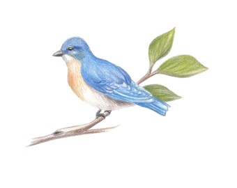 "Bluebird Illustration, digital download for a 5"" x 7"""
