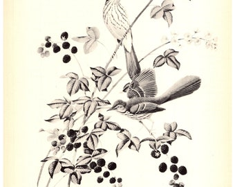 Brown Thrasher Print by Athos  Menaboni - Book Plate - Vintage Wall Hanging