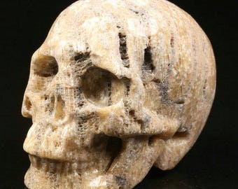 """Stunning Memento Mori Carved Coral Fossil [Agatized Coral] Skull Figure Healing Pendant 2.1"""""""