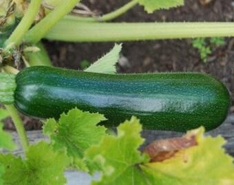 Zucchini Seeds, Non-GMO Vegetable Seeds, Squash Seeds, Vegetable Seeds, Heirloom Zucchini seeds