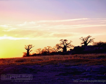 MAGICAL NATURE Landscape Photography BAOBAB trees scenic silhouette Gold purple pink yellow wall art red orange sunlight clouds sky sunset