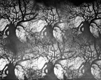 "Tree Abstract 5x7"" Pinhole Print"