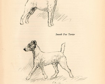 """1938 Vintage DOG PRINT from a book of Sketches by K.F. Barker """"Smooth Fox Terrier"""""""