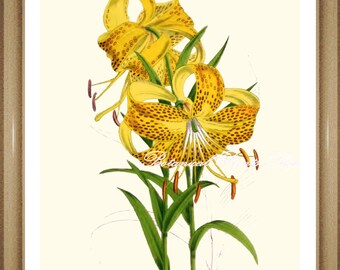 "Botanical Print. Lily #2. Yellow Flower Print. Lily print.  8x10"" 11x14"""