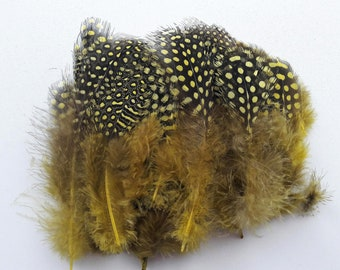 50 yellow 2-12cm Guinea fowl feathers