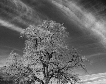 Palouse Tree Deserted Abandoned House Clouds Infrared Landscape Vertical Dramatic Sky Office Wall Art Ready to Frame Matted Bathroom