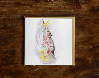 Honey Possum Greeting Card