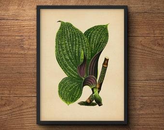 Botanical Leaf Print, Tropical Leaves Art, Tropical Leaf Art, Tropical Art Decor, Botanical Print, Tropical Artwork, Tropical Art Print