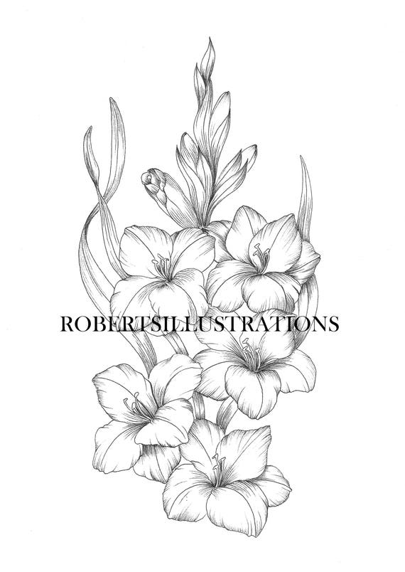 Birth Flower August Gladiola Coloring Page Adult