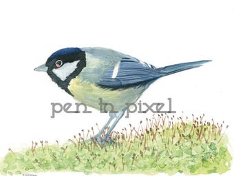 Great Tit Watercolour Print