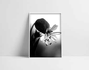 Black And White Print Flower Photography Digital Download Flower Close Up Floral Decor Flower Print Romantic Art Gift For Women Botanicals