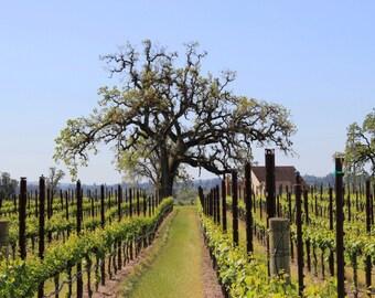 Sonoma vineyard print, Sonoma vineyard canvas, wine country photo, Napa photo, Sonoma print, large canvas, oversized print, oversized art