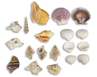 Deluxe Shell Bag, Philippines