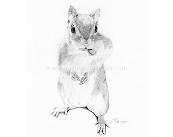 Squirrel Limited Edition Print