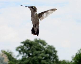Oiseau rouge colibri photo macro photographie 8 x 10 - Jeux d oiseau qui vole ...