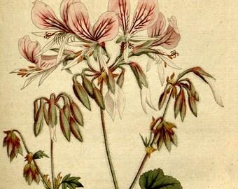 Flower print art, Nature decor, Antique print, Flower art, Vintage print, Vintage poster, 165