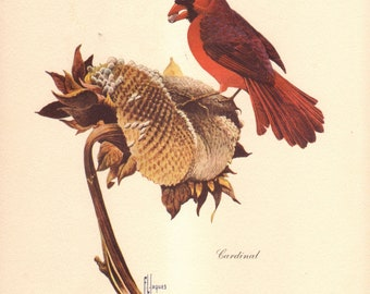 F.L Jaques print of Cardinal on Sunflower