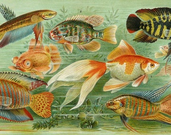 1897 Antique lithograph of COLOR FISHES. Tropical Fishes. Exotic Fishes. Fish. Sea Life. 121 years old gorgeous print