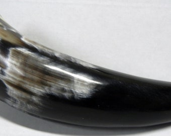 0 (1 pc) Polished Water Buffalo Horns From India - 0499