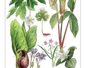 """Spring Wildflowers 11""""x14"""" Print"""