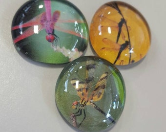 Set of 3 colorful super strong glass magnets, Dragonfly magnets, nature, floral refrigerator magnets, dragonflies