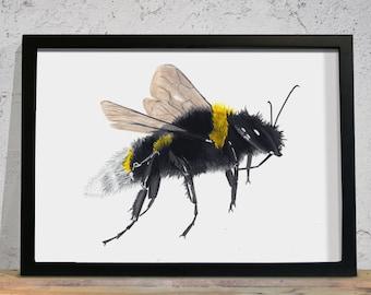 Bee Painting, Original Art, Art Print, Signed Print, Honeybee, Honey bee, Bumblebee, Bumble Bee, Woodland Creatures, Realistic