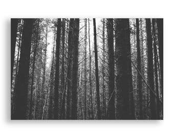 Forest Print Black and White - Treescape, Scotland Landscape, Moody Nature Photography,Simple Home Decor,Printable Wall Art,Digital Download