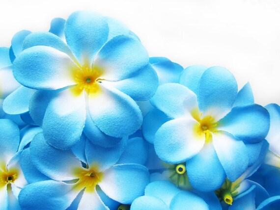 24 blue plumeria frangipani heads artificial silk flower 3 24 blue plumeria frangipani heads artificial silk flower 3 inches wholesale lot for wedding work make hair clips headbands mightylinksfo