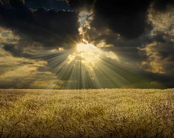 Amber Waves of Grain, Sunbeam Art Print, Golden Wheat Field, Farm Wall Decor, Michigan Landscape, Nature Landscape, Fine Art Photography