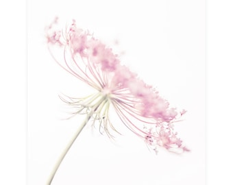 Girls Room Art Print, Pink Botanical Print, Queen Annes Lace Flower Photography Print