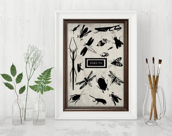 Print of  insects vintage